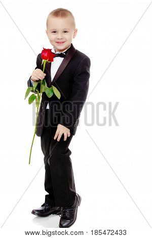 Beautiful little boy in a strict black suit , white shirt and tie.Boy holding a flower of a red rose on a long stem.Isolated on white background.