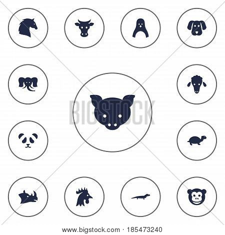 Set Of 13 Alive Icons Set.Collection Of Hound, Bear, Tortoise And Other Elements.