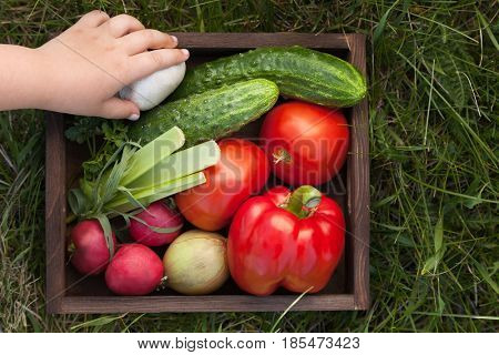 Vegetables in a box for lettuce on the grass in the summer garden, a child's hand puts a mushroom