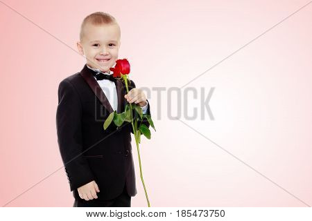 Beautiful little boy in a strict black suit , white shirt and tie.Boy holding a flower of a red rose on a long stem.Pale pink gradient background.