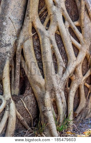 Close up ofTree stem and root background