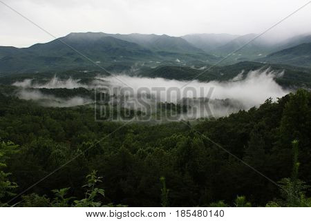 A low fog on a thick forest in the Smokies after a rain.