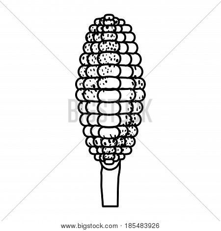 black silhouette of corncob in close up vector illustration