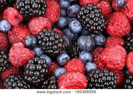 Fresh Orhanic Berries. Summer berries, gardening concept.