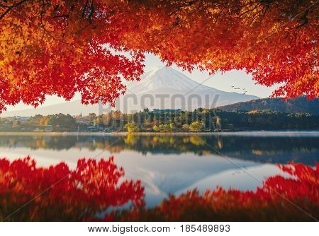 Mt.Fuji in autumn on sunrise at lake Kawaguchiko Japan. mount Fuji. mount Fuji Japan. mount Fuji at lake Kawaguchiko, japan. mount Fuji and maple. mount Fuji. landscape