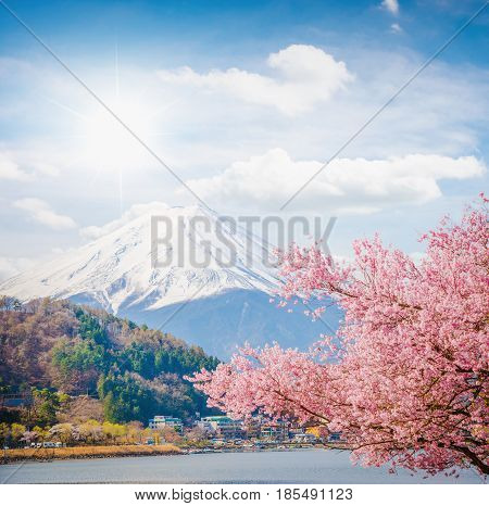 Mountain Fuji in spring Cherry blossom Sakura and Fuji at Kawaguchiko Japan. mount Fuji. mount Fuji Japan. mount Fuji at lake Kawaguchiko, japan. mount Fuji and sakura. mount Fuji. landscape