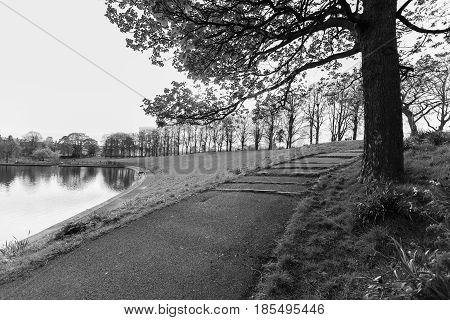 Pond, Tree And Footpath, Inverleith Park, Edinburgh, Scotland In Monochrome