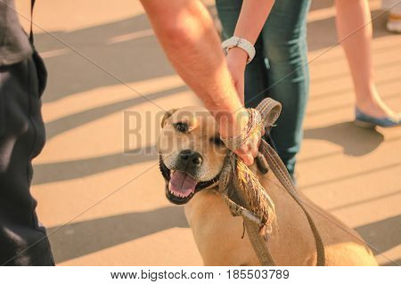 male hand patting smiling brown dog head