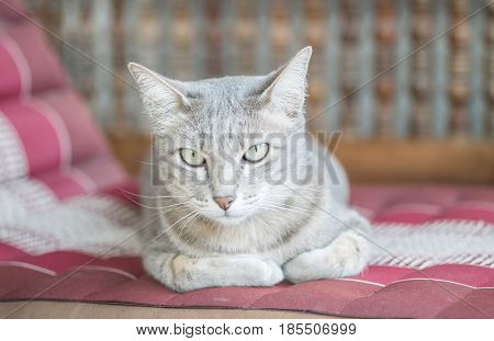 Closeup cute cat sit on blurred wood chair in front of house background
