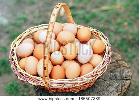 a large basket on the stump with natural and fresh eggs