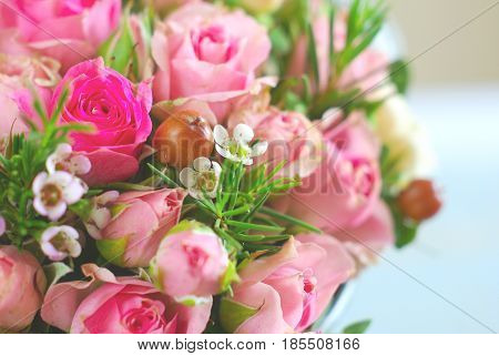 Red pink rose small white flowers romantic background