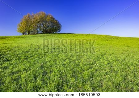 A view of a lone spring tree on a meadow