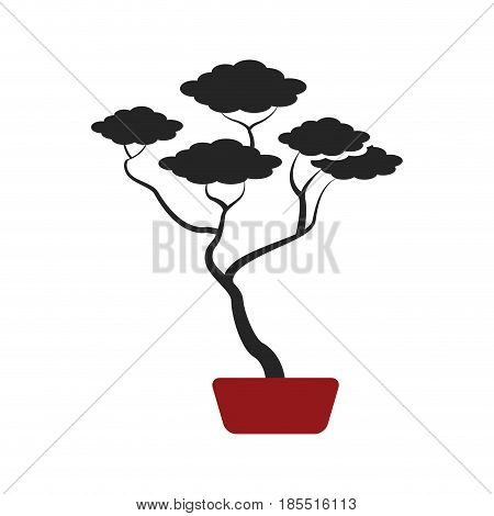 bonsai tree of pine ceramic pot botanical vector illustration