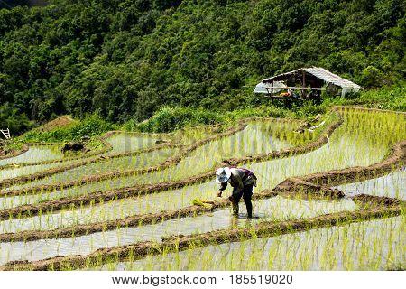 Thai .tribes Fermer
