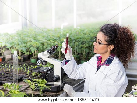 Engineer Working On Plant Protection