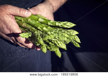 Fresh green Asparagus as close-up in hands of a farmer hand