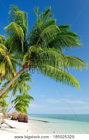 Indonesian sand beach with palms on an island Drawan on the Sangalaki archipelago near Borneo
