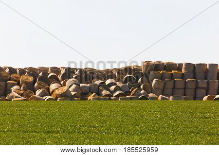Haystack in middle of the field prepared animal fodder on a farm. Agriculture mass production livestock breeding concept with copy space.