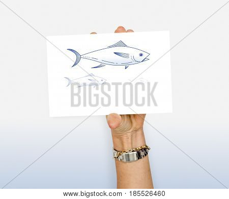 Animal Fish Aquatic Blue Board