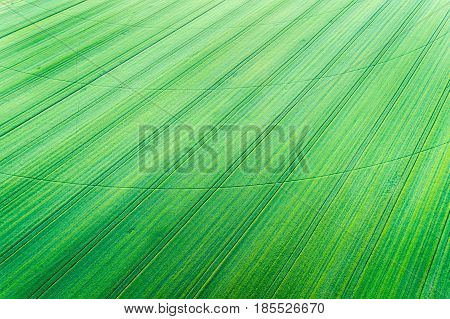 Green Wheat Field With  Center Irrigation System Track