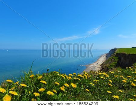 cliff coast landscape with baltic sea and blooming dandelions in