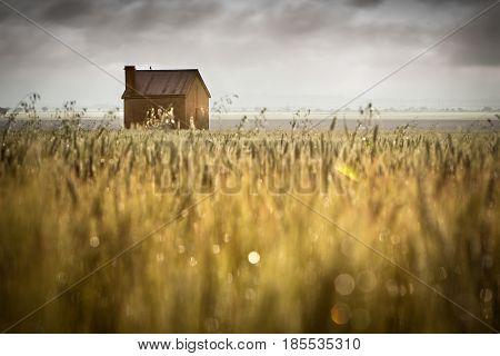 Beautiful Rural Scene in South Australia
