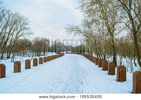 Brown gravestones organised in straight rows with snow and trees in background