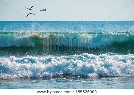 Birds fly over breaking wave