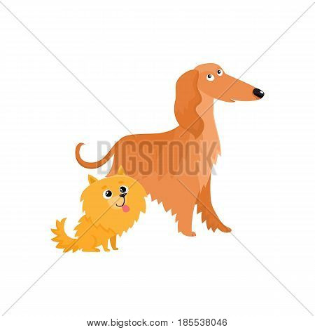 Couple of cute, funny dog characters - Afghan hound and Pomeranian spitz, cartoon vector illustration isolated on white background.