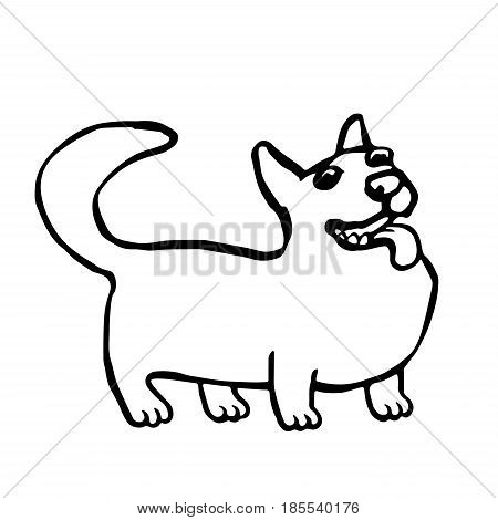 Corgi dog isolated vector illustration. Funny cartoon fur character. Contour freehand digital drawing cute pet.