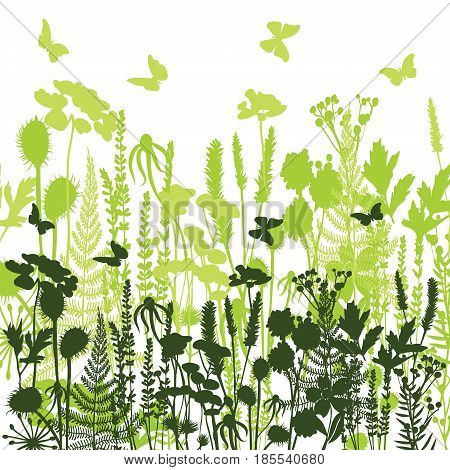 Decorative meadow silhouette of herbs and flowers illustration of wild flowers herbs and grasses