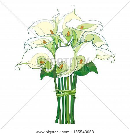 Vector bouquet with Calla lily flower or Zantedeschia with green leaves in pastel color isolated on white background. Floral elements in contour style with calla for summer design or invitation.