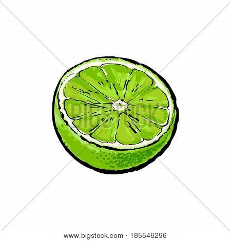 Half of green lime, hand drawn sketch style vector illustration on white background. Hand drawing of unpeeled lime cut in half