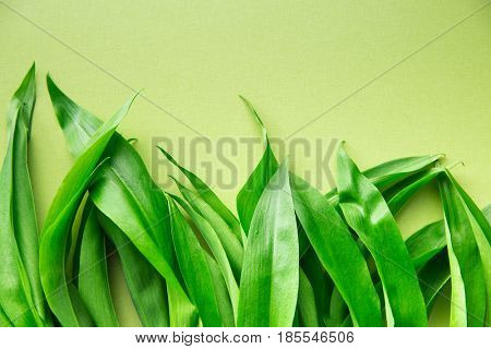 Ramson or wild garlic leaves on green background. Top view.