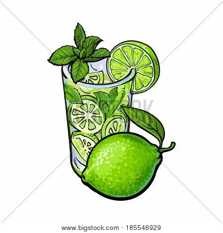 Whole lime and glass of freshly squeezed juice, mojito, cocktail with ice and mint, sketch vector illustration isolated on white background. Hand drawn glass of lime juice and lime quarter