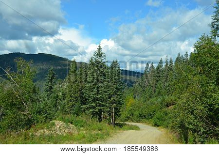 The taiga road leads the traveler among the tall firs and pine trees to new discoveries
