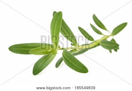 hyssop (Hyssopus officinalis) isolated on white background