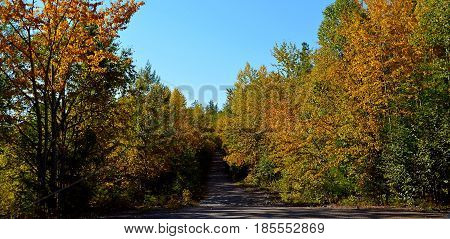 A forest road leads a tourist or a traveler among the forest and hills to conquer new horizons, the yellow leaves of trees tend to the blue and clear sky