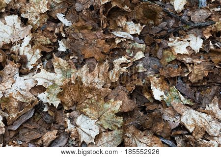 Texture last year's fallen leaves. Rectangular background with dry foliage.