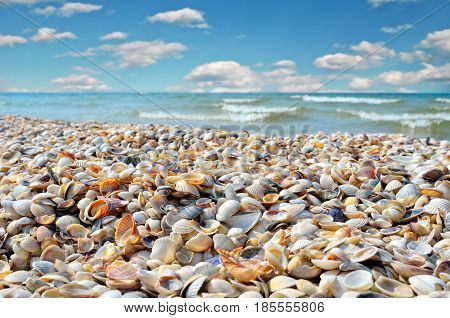 Sea Waves Washed Clean Beach Made Of Shells. Landscape On A Wild Beach. The Sea In The Summer.