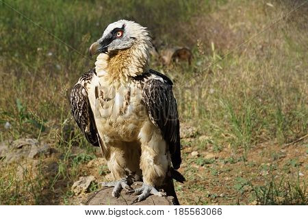 Bird of prey sitting on a stump in the sun on the background of dry grass