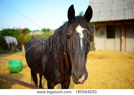 Funny Closeup Of A Horse Looking At The Camera