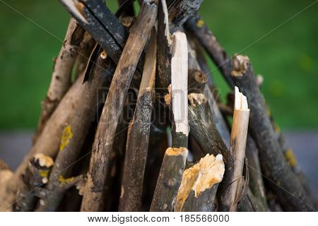 Bonfire without fire. Wood green nature. Wooden