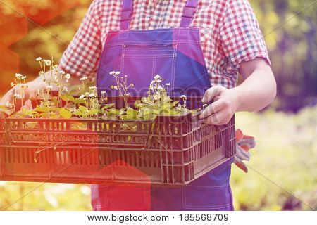 Midsection of man holding crate of potted plants at garden