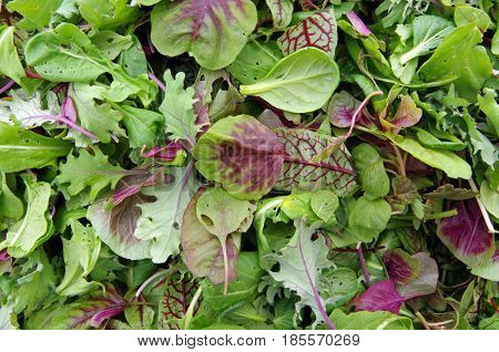 Fresh cut pile of organic  salad micro greens view from above