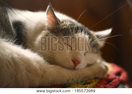 Cat Sleeping On Wooden Chair In Country House Interiour