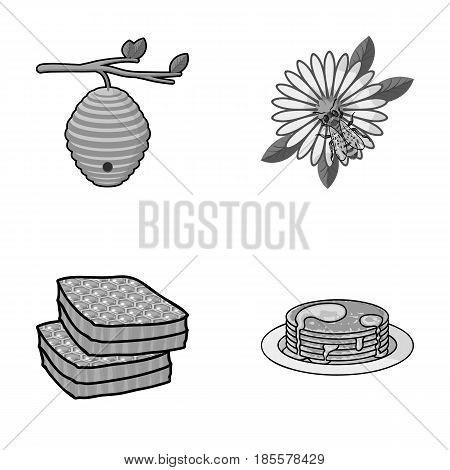 A hive on a branch, a bee on a flower, a honeycomb with honey, a honey cake.Apiary set collection icons in monochrome style vector symbol stock illustration .