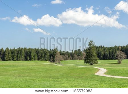 Narrow winding hiking and cycling path across grass field and trees. Fresh green grass, blue sky and white clouds.