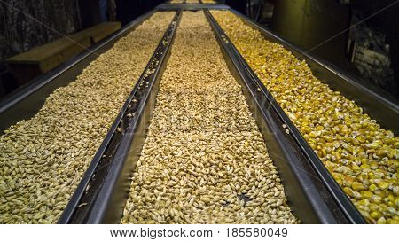Corn, Malted And Unmalted Barley
