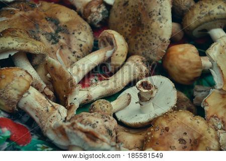 Close Up Of Mixed Mushrooms, Preparation For Drying. Heap Of Different Varieties Mushrooms For Soup.